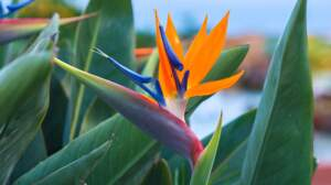Testez vos connaissances sur les fleurs exotiques