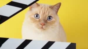 Êtes-vous incollable sur les animaux au cinéma ?