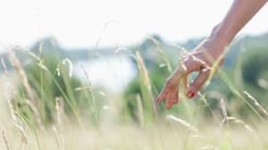 Tiques et maladie de Lyme : testez vos connaissances