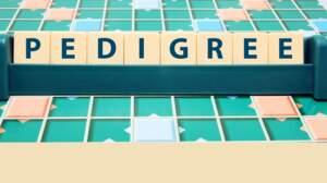 Connaissez-vous les nouveaux mots du dictionnaire ?