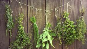 Herbes aromatiques : saurez-vous les reconnaître?