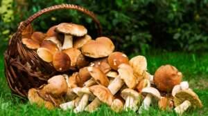 Connaissez-vous bien les champignons ?