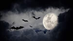 Connaissez-vous ces superstitions autour des animaux ?