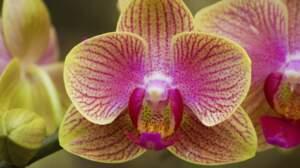 Orchidées, testez vos connaissances
