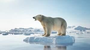 Que savez-vous des espèces menacées ?