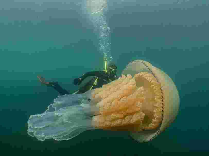Des centaines de milliers d'espèces sont menacées d'extinction, mais les méduses prospèrent dans les eaux chaudes et polluées