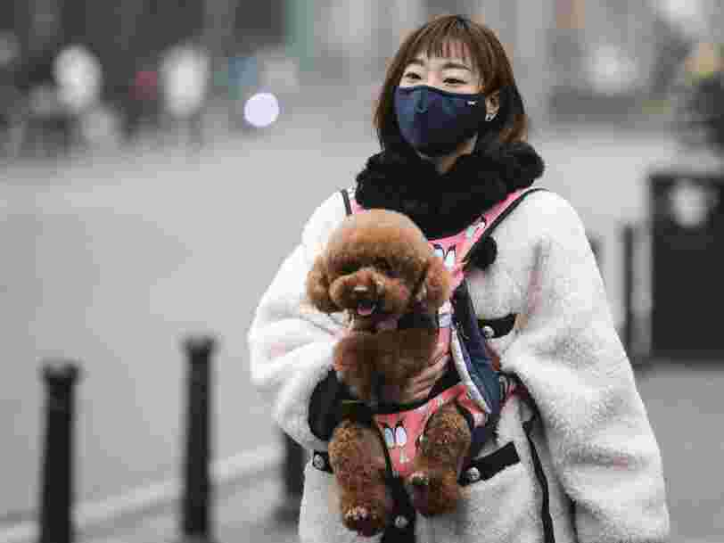 Des milliers d'animaux de compagnie sont piégés à Wuhan, leurs propriétaires étant bloqués à l'extérieur de la ville par le coronavirus