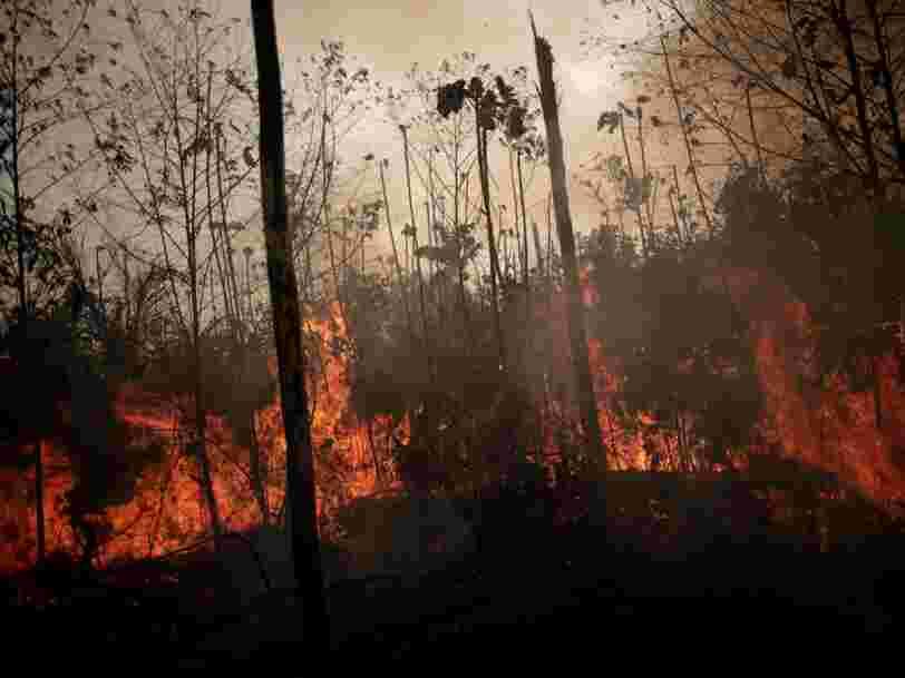 Amazonie : la France contribue à la déforestation en important du soja, assurent les ONG
