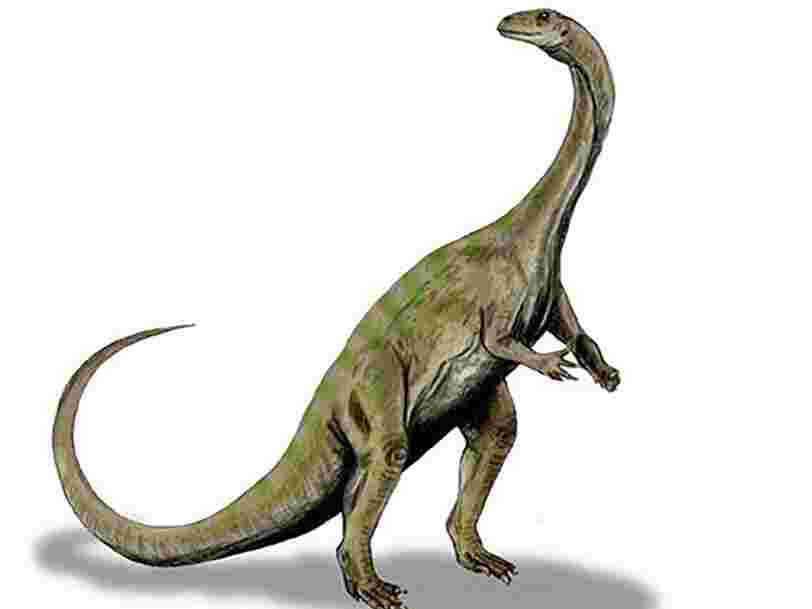 Une nouvelle espèce de dinosaure découverte 40 ans après que l'on a trouvé des ossements d'un des spécimens