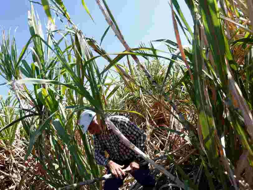 Les 10 pays qui cultivent de plus en plus d'OGM