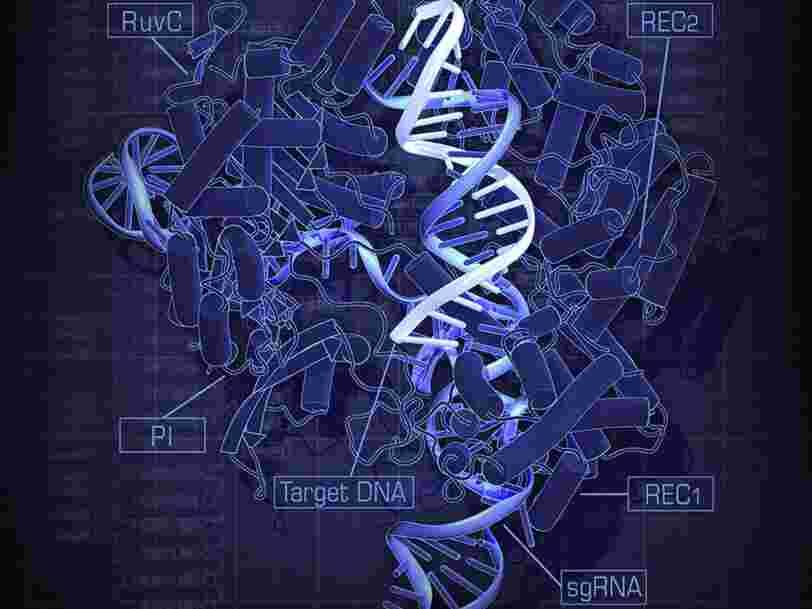 Les ciseaux génétiques censés révolutionner le monde médical en corrigeant des maladies rares auraient un effet secondaire plus qu'indésirable