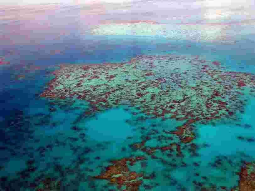 Le réchauffement climatique n'est pas seul responsable de la mort des récifs coralliens