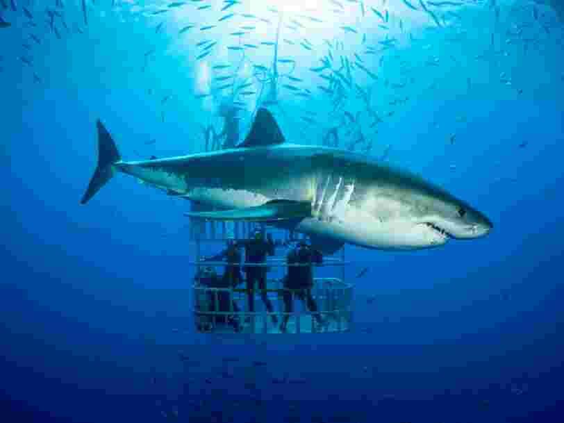 Le génome du requin est séquencé. Comment la lutte contre le cancer pourrait en profiter