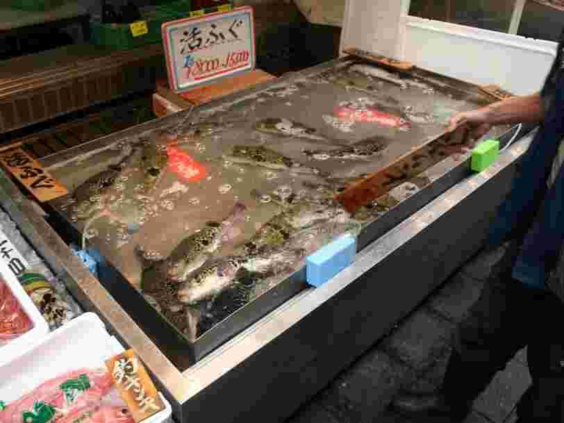 Le réchauffement climatique a créé un cousin hybride du poisson toxique japonais fugu — et ça inquiète le gouvernement nippon