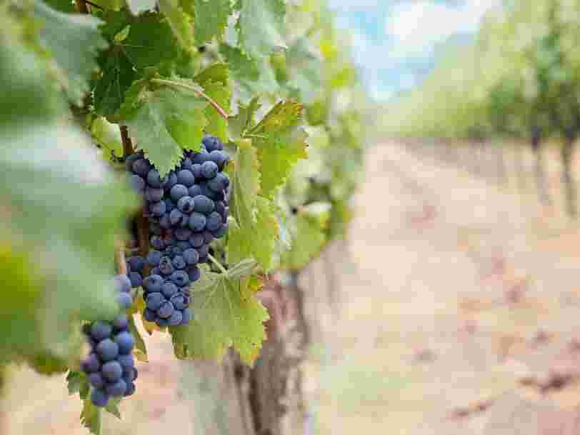 Le plus grand propriétaire de vignobles bordelais aurait détourné 32 M€ de fonds publics chinois pour acquérir des domaines