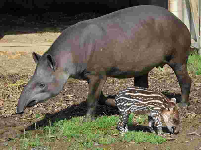 12 animaux qui changent complètement d'apparence à l'âge adulte