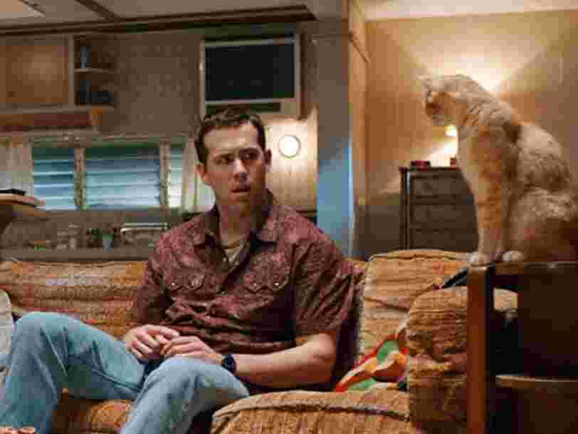 Un adolescent est devenu schizophrène après avoir été contaminé par une bactérie transmise par son chat