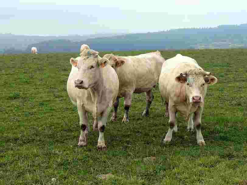 L'exportation de milliers de vaches de Normandie vers l'Iran est bloqué par le rétablissement des sanctions américaines