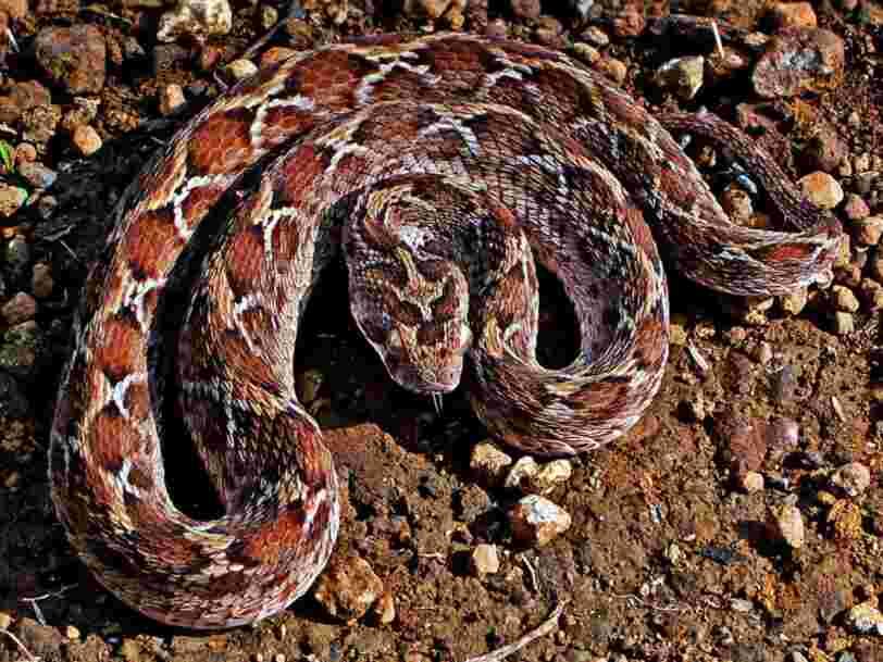 6 médicaments fabriqués à partir de venin de serpent et d'autres toxines animales