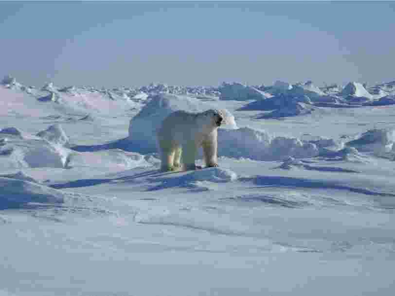La couche de glace la plus ancienne et la plus épaisse de l'Arctique s'est fissurée pour la 2e fois de l'année — voici pourquoi les scientifiques trouvent cela 'effrayant'
