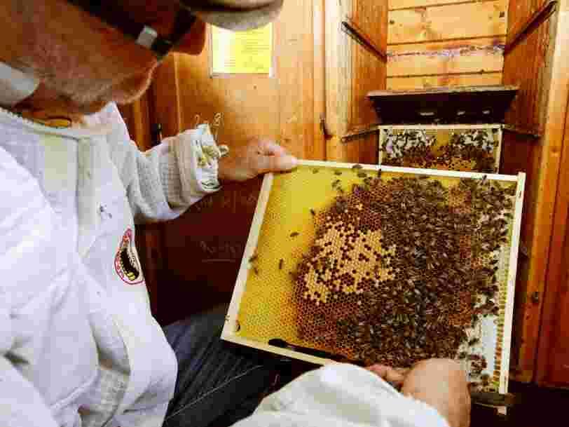 La France s'apprête à interdire 5 insecticides nocifs pour les abeilles — mais ces dernières semblent avoir développé une sorte d'addiction à ces substances