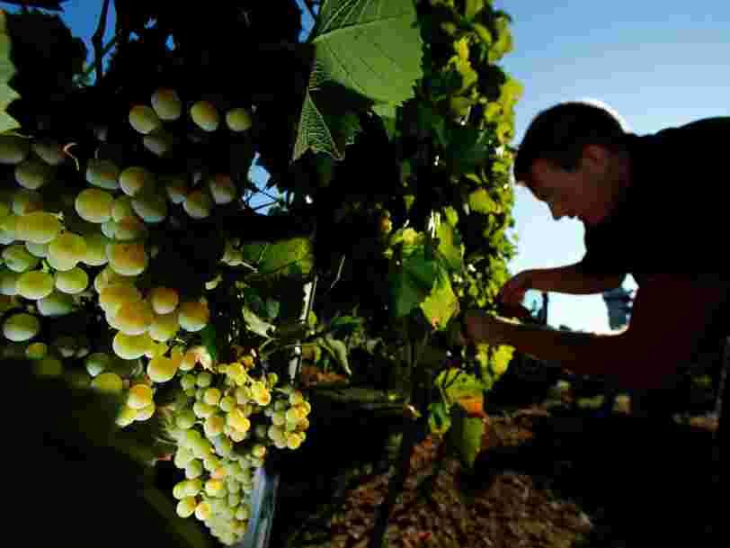 Plusieurs régions viticoles ont alerté sur leurs difficultés à recruter des vendangeurs — mais il y a une région qui s'en sort mieux