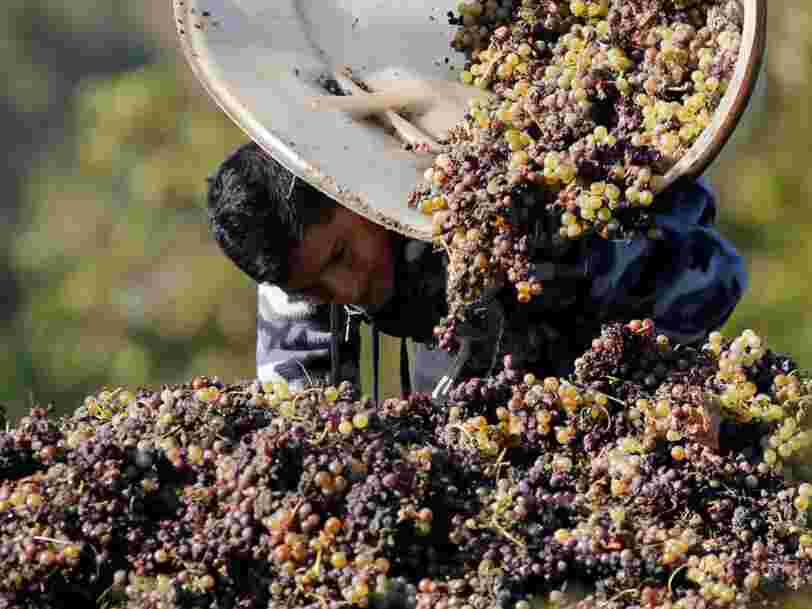 La production mondiale de vin atteint un des plus hauts niveaux depuis l'an 2000 — voici les 11 plus importants pays producteurs