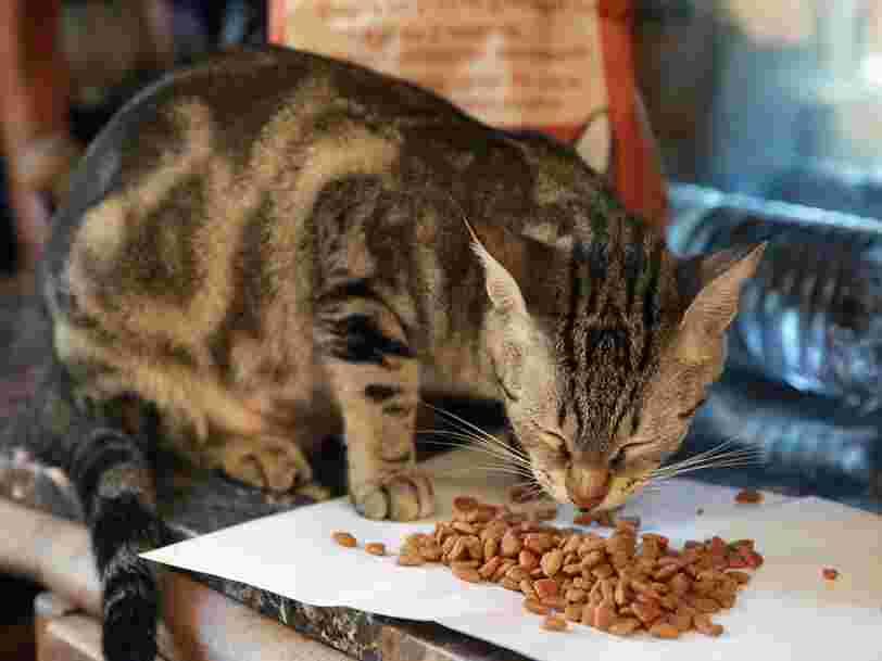 5 choses qu'il faut regarder sur l'étiquette des aliments de votre chien ou chat
