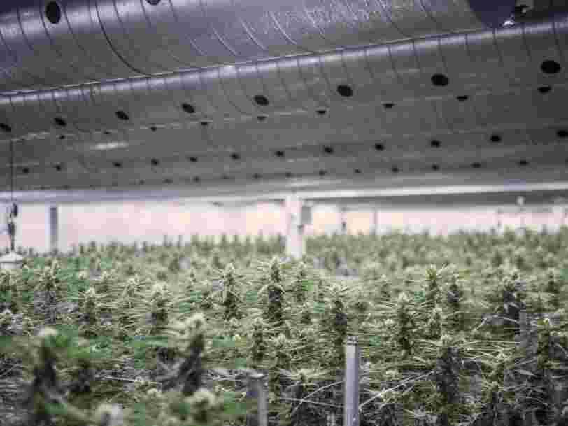 Le géant de la bière qui possède Corona a payé 191 M$ pour une part du premier producteur de cannabis légal au monde