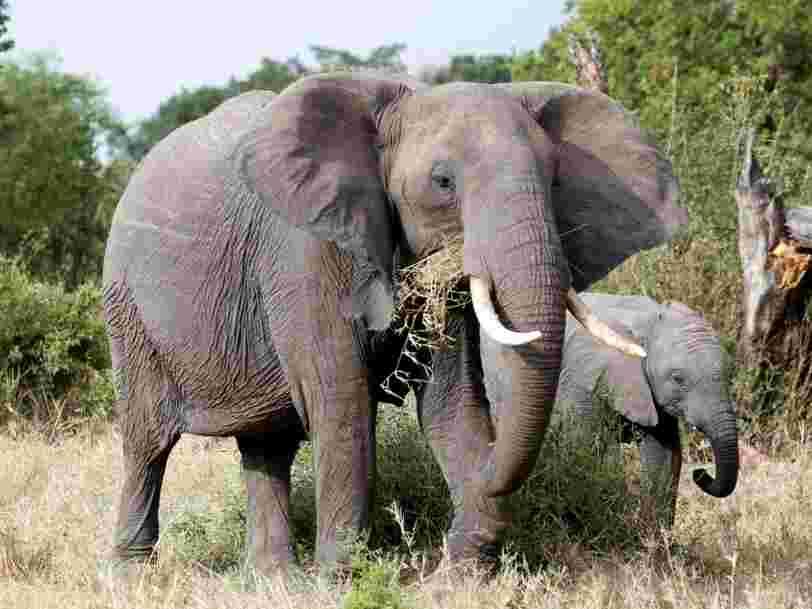 En 44 ans, la Terre a perdu 60% de ses animaux sauvages