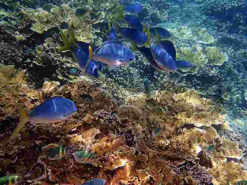 La moitié de la Grande barrière de corail a disparu depuis 2016 —voici pourquoi c'est un problème pour notre propre survie