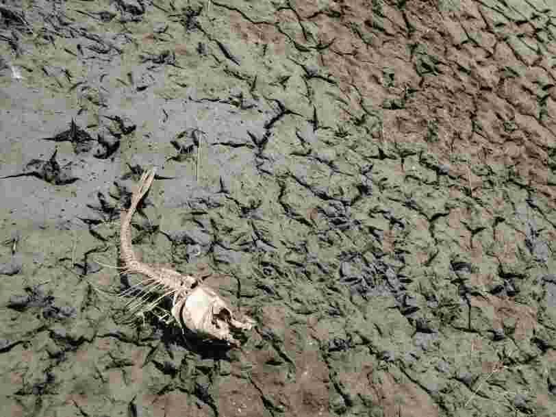 16 signes qui montrent que les animaux et les plantes vivent une 6e extinction de masse