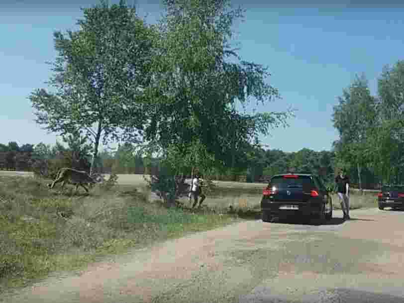 Voici la vidéo qui montre le moment terrifiant où des touristes français ont été pris en chasse par des guépards dans un parc zoologique aux Pays-Bas