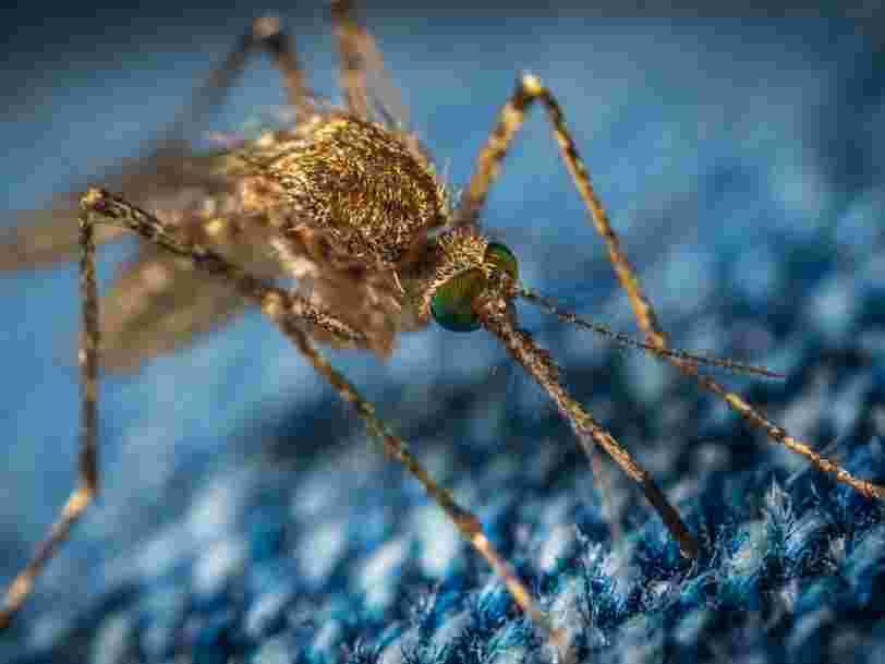 Les moustiques pourraient avoir moins envie de nous piquer si on contrôlait l'un de leurs gènes