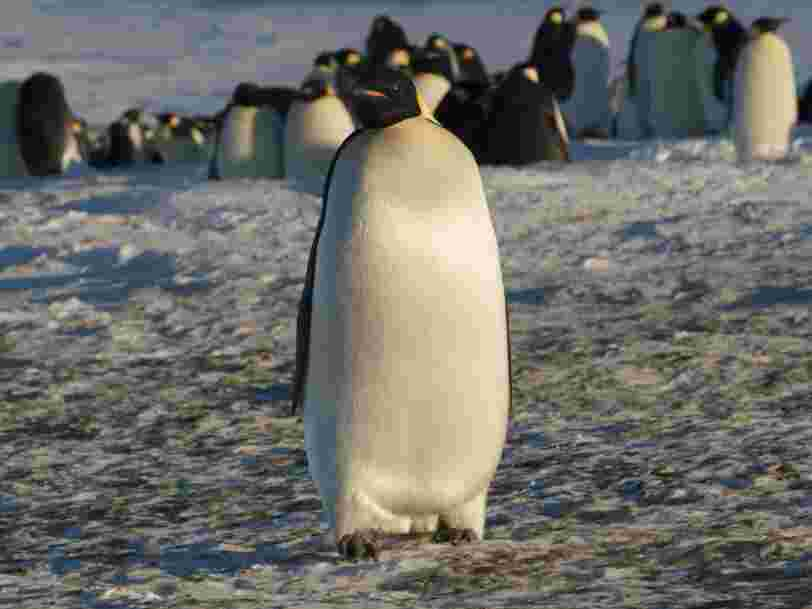 12 espèces animales menacées de disparaître en France à cause du réchauffement climatique