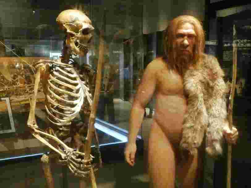 Les 22 espèces humaines que l'on connaît actuellement dans l'histoire de l'évolution