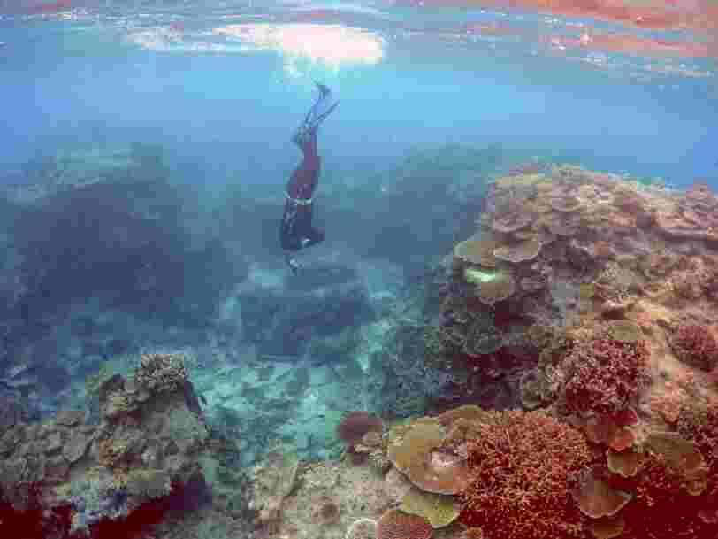 Une étude estime que la valeur économique de la Grande barrière de corail en Australie est équivalente au PIB de la Bolivie