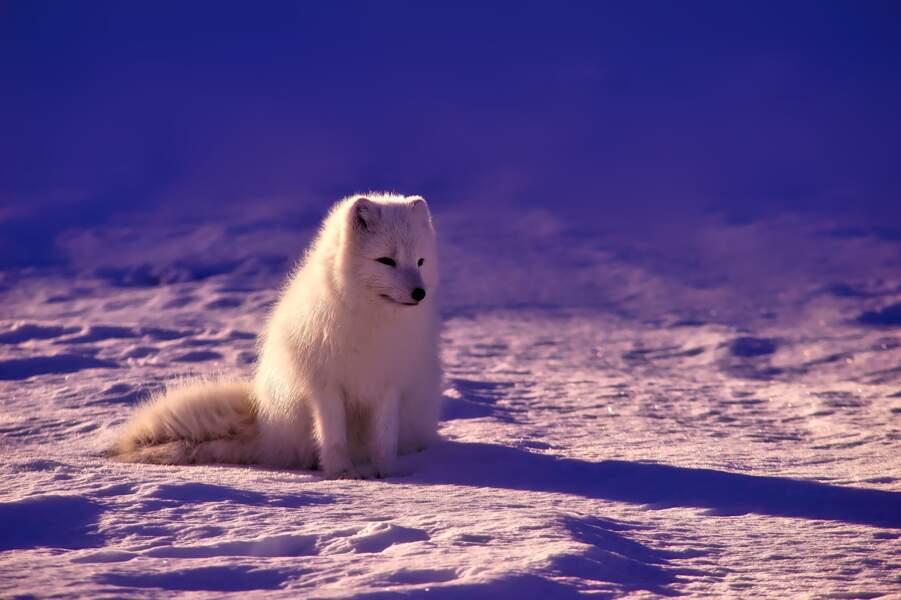 7. Pour sauver les animaux en voie d'extinction...