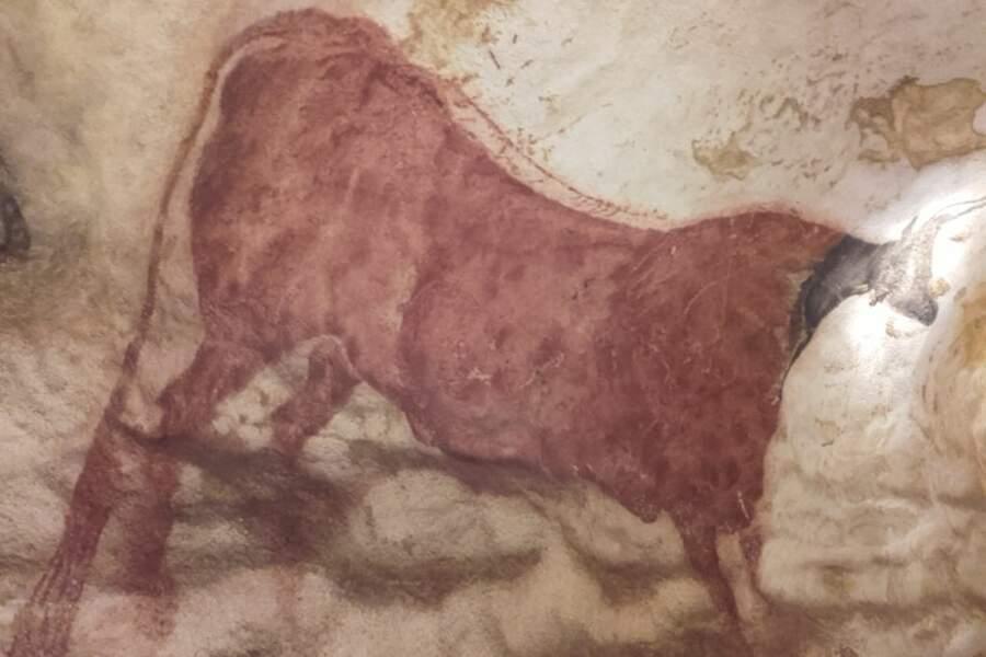 Vache rouge à collerette, entrée du diverticule axial, paroi gauche.