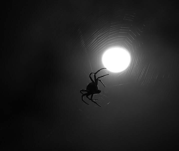 Nous avalons des araignées durant notre sommeil