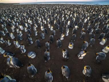 Les plus belles photos des Îles Kerguelen