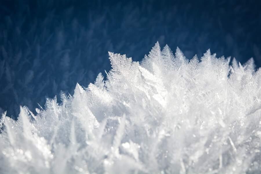 ... les congeler pour les faire revivre !
