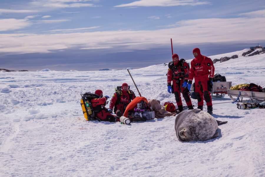 L'équipe de plongée et un phoque de Weddell