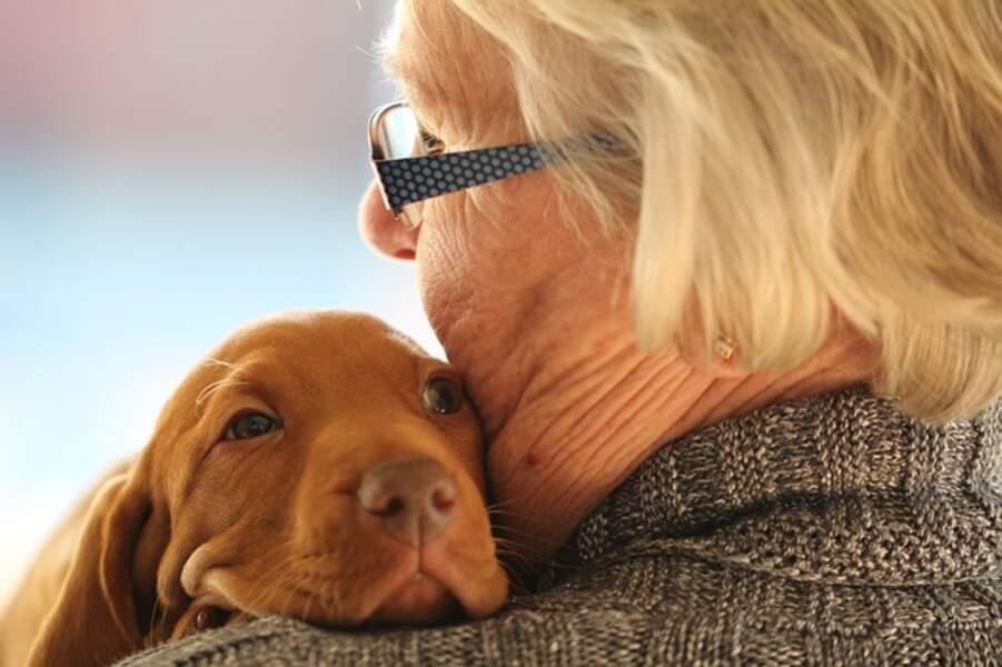 Des chiens accueillis durant l'hospitalisation de leur maître