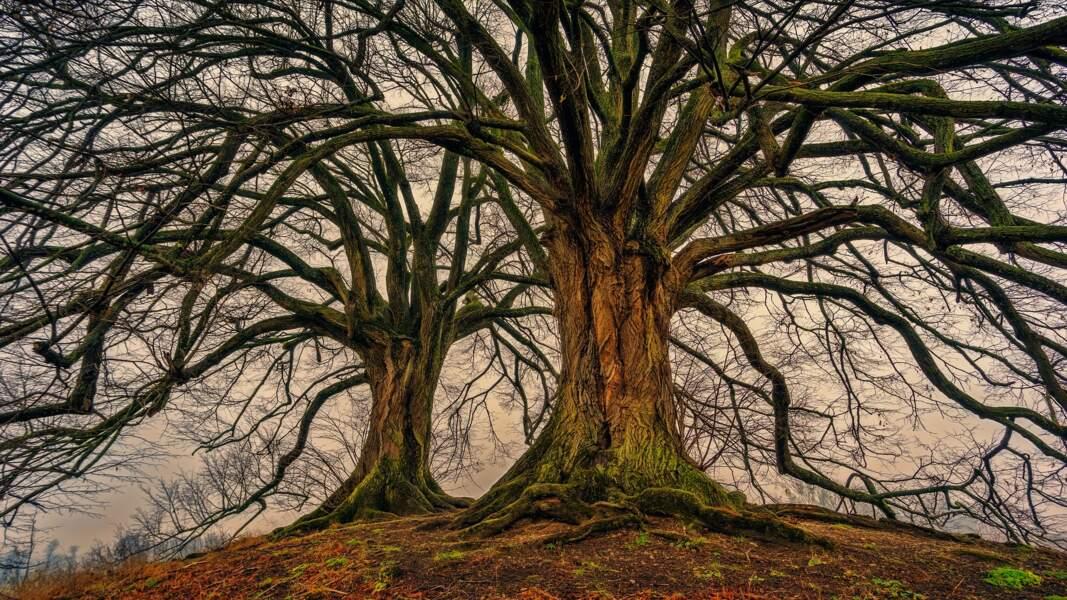 8. Câliner les arbres à Sourcieux-les-Mines, près de Lyon