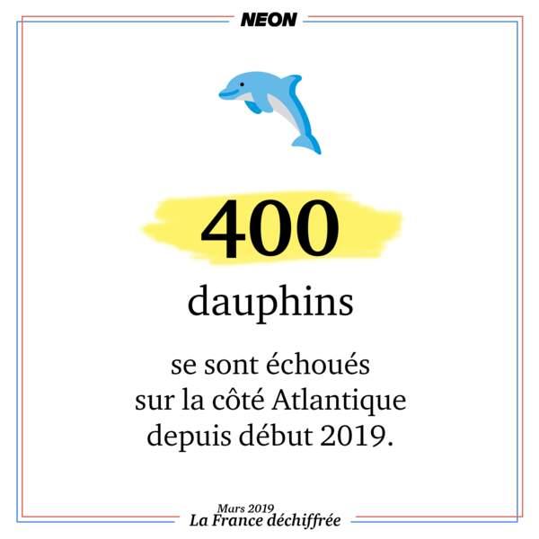 400 dauphins se sont échoués sur la côte Atlantique depuis début 2019