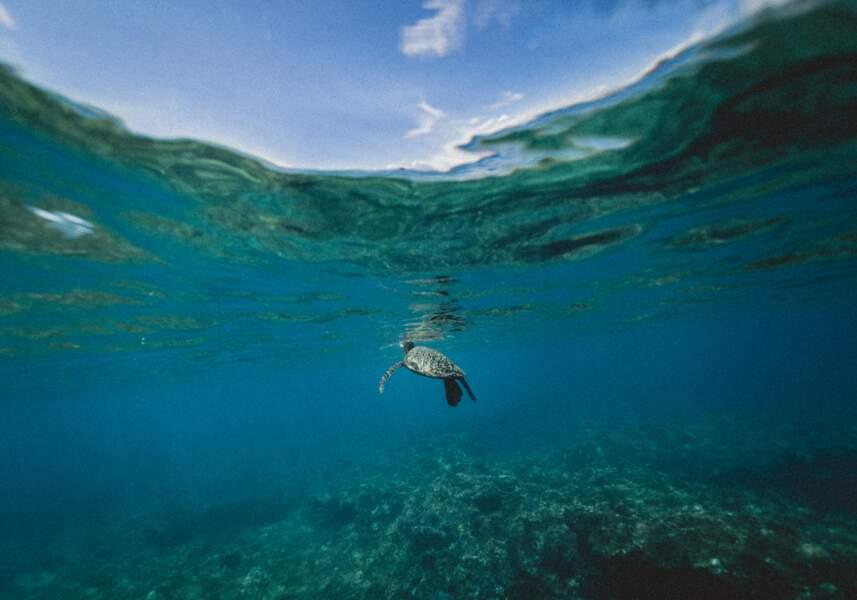 Comment sauver les espaces marins ?
