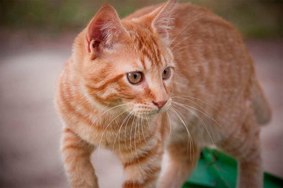 Il y a plus de 500 millions de chats domestiques dans le monde