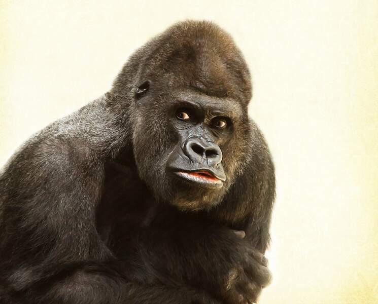 Gorille : Un adepte du missionnaire ?