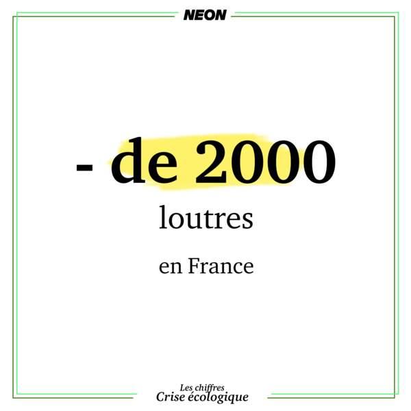 Il ne reste qu'entre 1000 et 2000 loutres en France